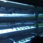 植物工場(実験)